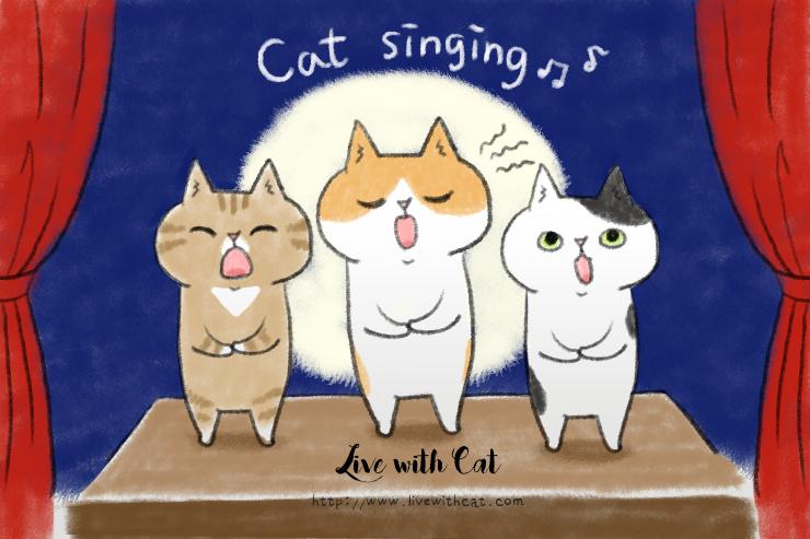 貓咪夜晚嚎叫