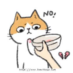 拒絕吃濕食的貓