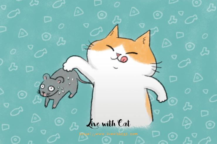 如何為貓轉食