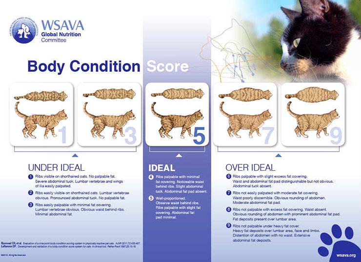 貓的體態評估表