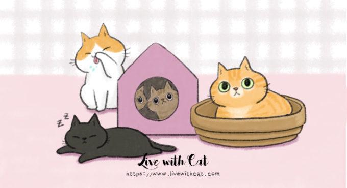 貓中途送養標準如何設定