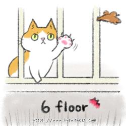 貓咪抓獵物