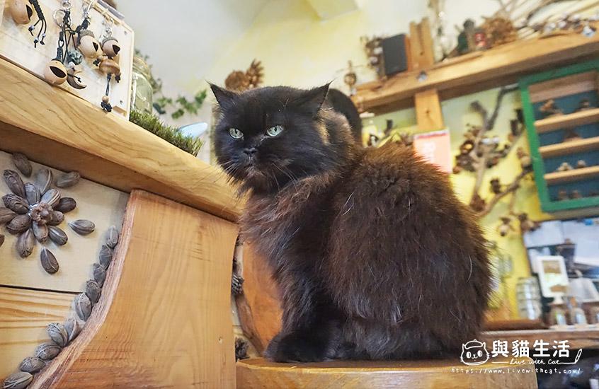 店貓 歐蜜瑪