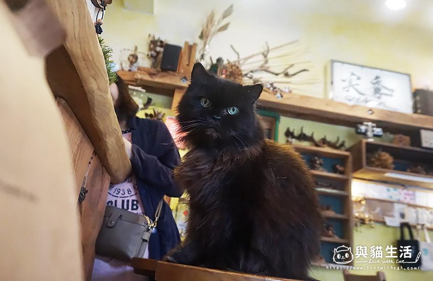 實季 店貓