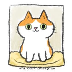 寵物彩色照片