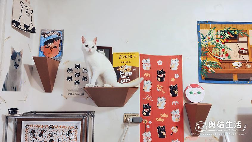 免鑽牆貓跳台推薦