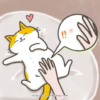 公貓也有奶頭