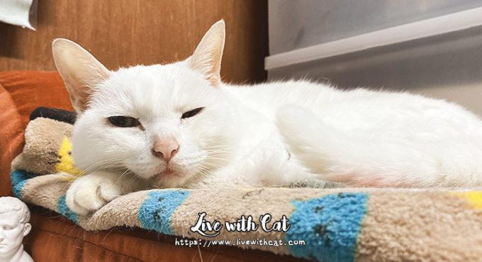 貓用電暖毯