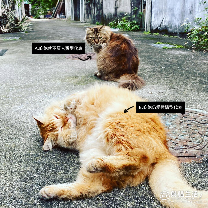 街貓選擇QA