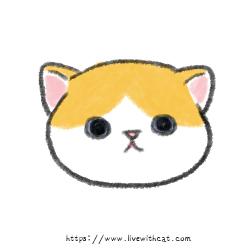奶貓週齡-滿2週