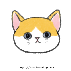 奶貓週齡-滿月後
