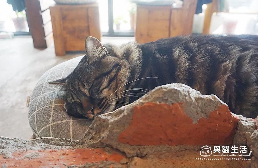 店貓在睡覺