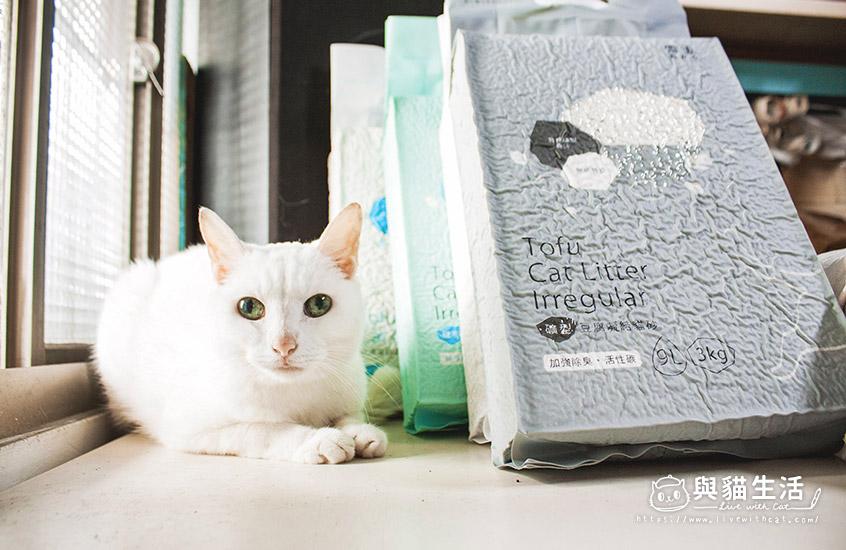 愛貓與貓砂合照2