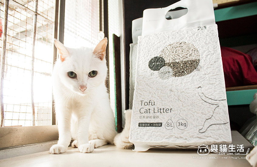 愛貓與貓砂合照3