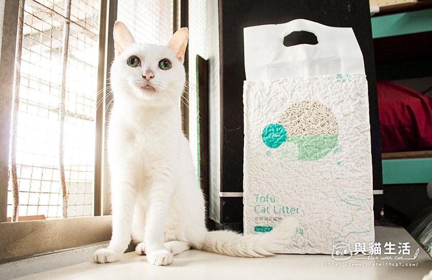 愛貓與貓砂合照4