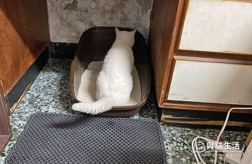 Mini如廁中
