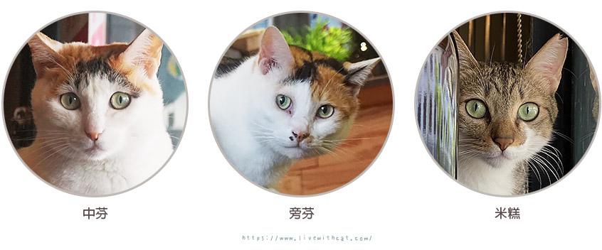 店貓點點名-壹樓貓咖啡