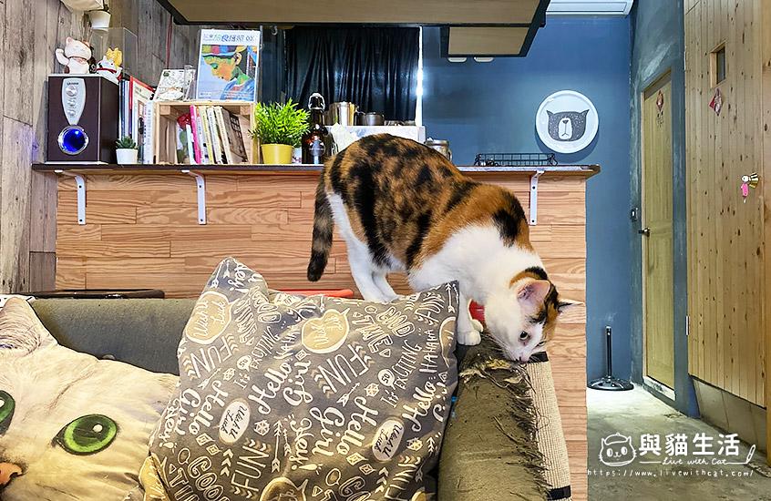 店貓-旁芬