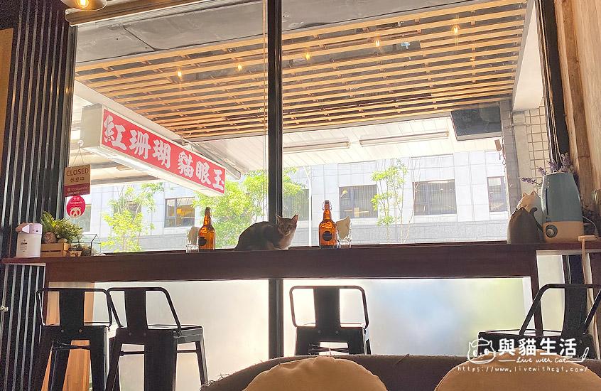 壹樓貓咖啡-吧檯區