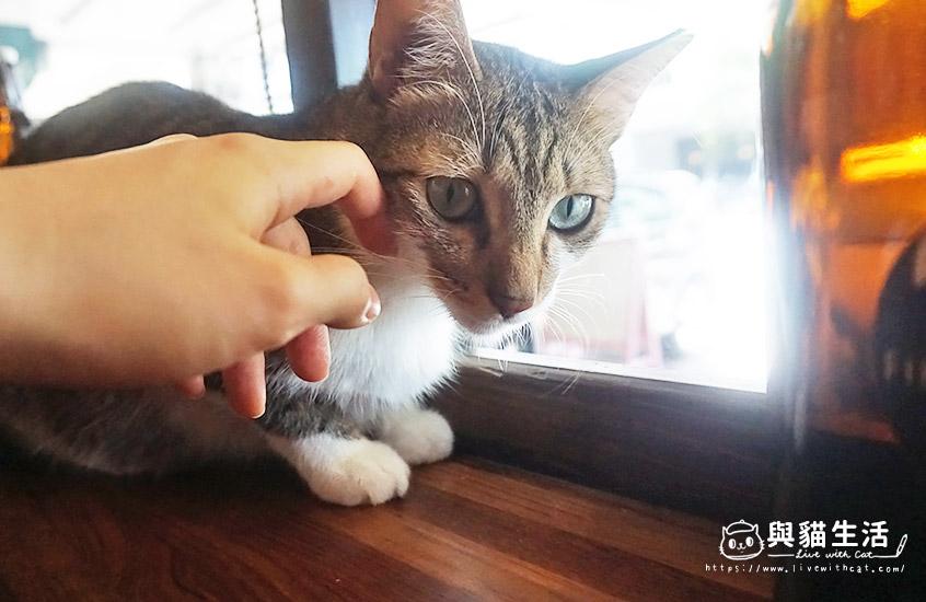 店貓-米糕