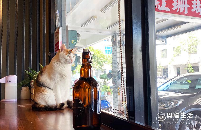 店貓-中芬