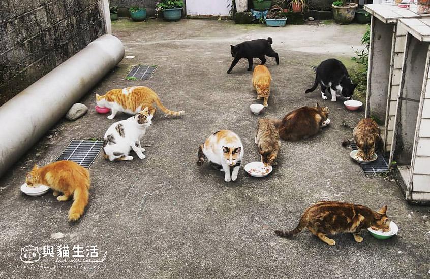 街貓十多隻