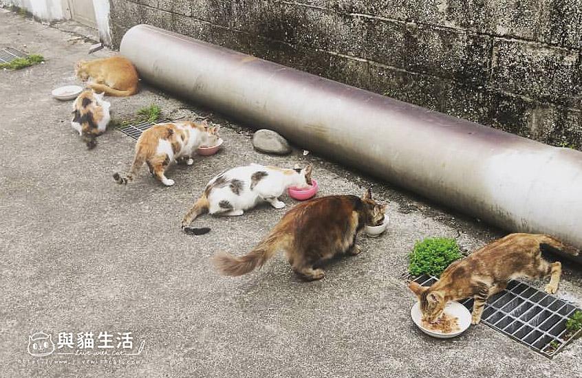 街貓5-6隻
