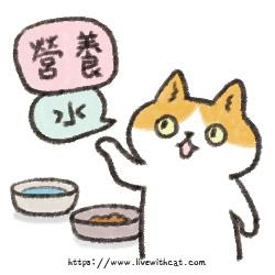 街貓餵食重點