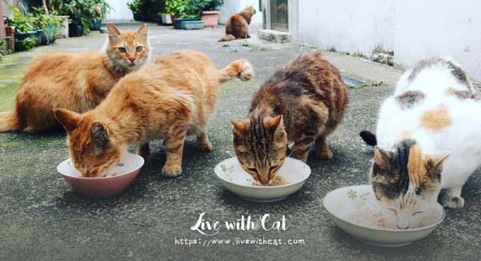 街貓飲食建議