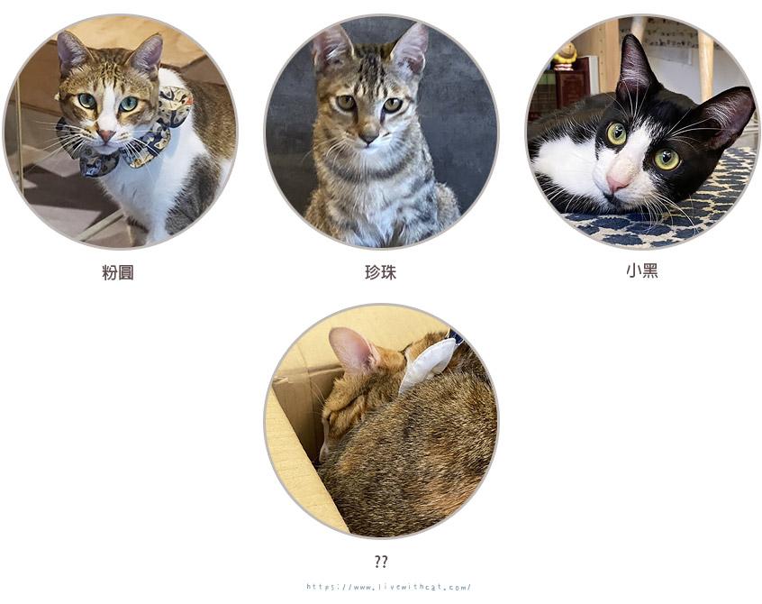 貓貓咪亞店貓