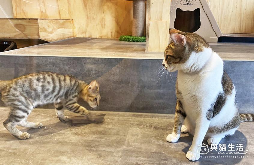 店貓粉圓和珍珠