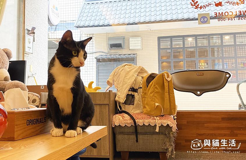 民宿貓小黑